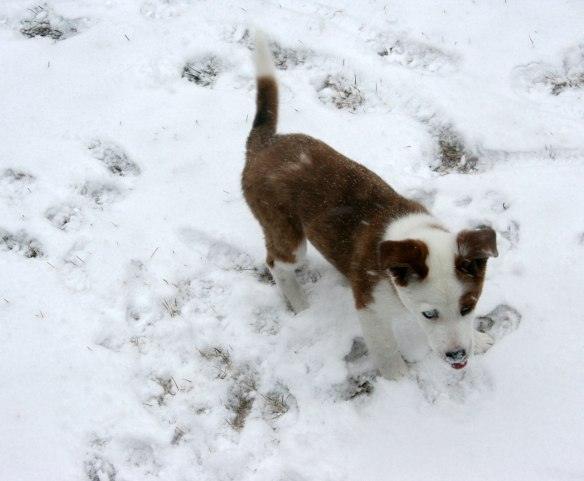 buster-eats-snow