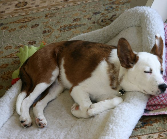 buster-sleeping