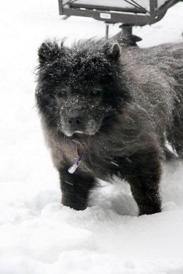 koko-snowy
