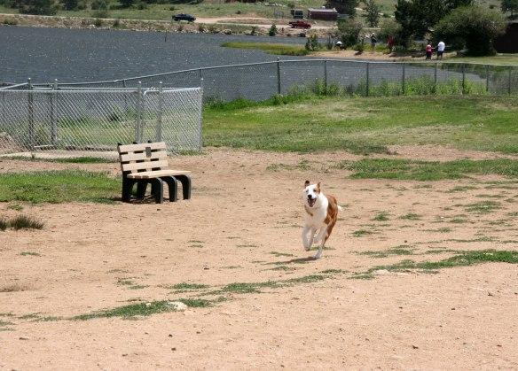 buster-estes-dog-park