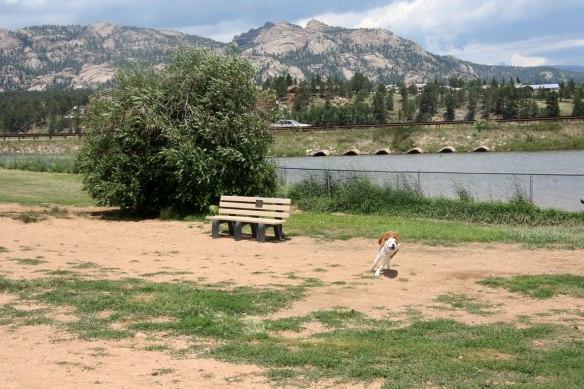 estes-dog-park
