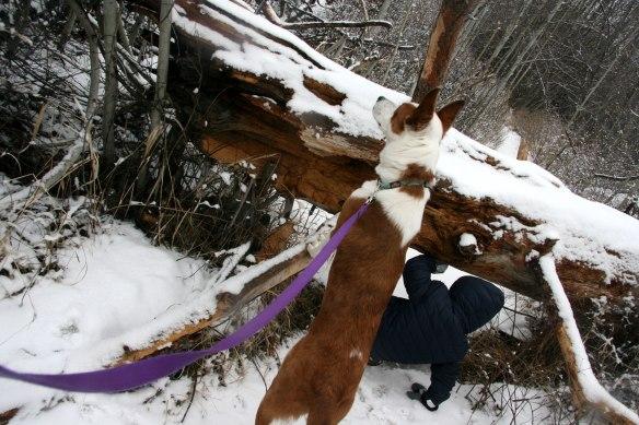 going-under-log