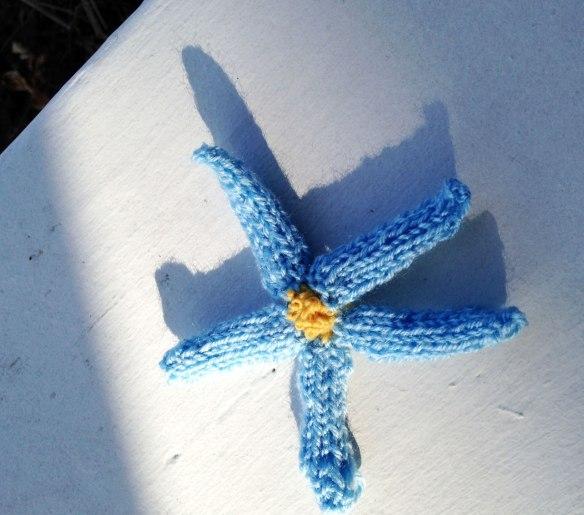 starfish-flower