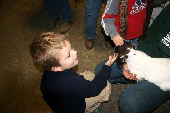 fair-baby-goat