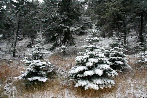 family-snow